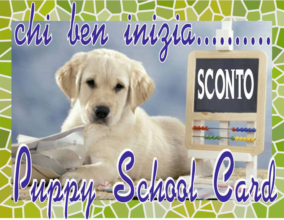 puppy-school-card