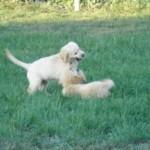 puppy-class-03